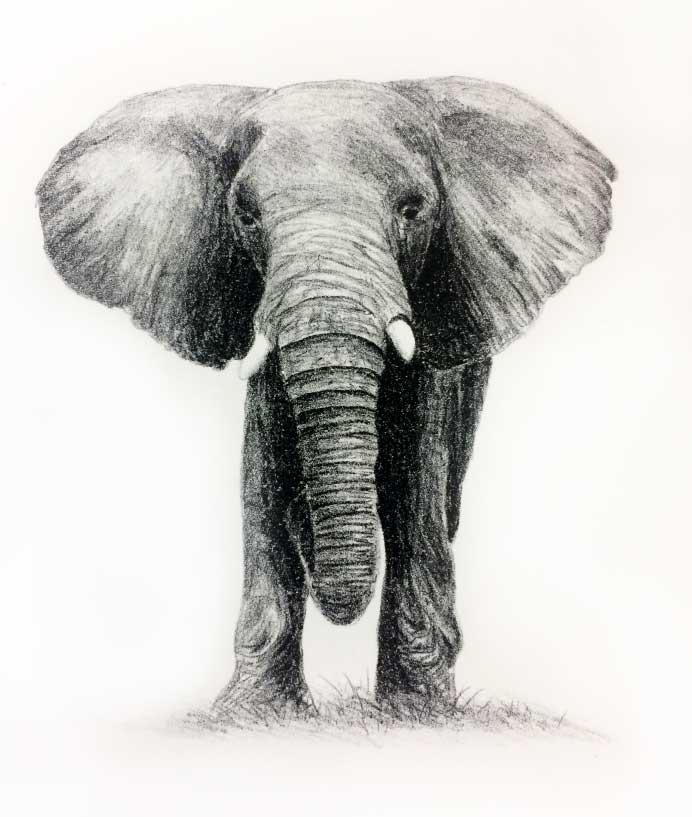 Grafisch Atelier Haarlem, litho, olifant